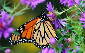 Attracting Insects To Your Garden by Vermont Garden Journal Attracting Pollinators To Your Garden