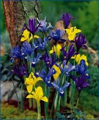 68 best other bulbs images on beautiful flowers