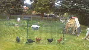 Chicken Fence/run - YouTube Building A Chicken Coop Kit W Additional Modifications Youtube Best 25 Portable Chicken Coop Ideas On Pinterest Coops Floor Space For And Runs Raising Plans 8 Mobile Coops Amazing Design Ideas Hgtv Pawhut Deluxe Backyard With Fenced Run Designs For Chickens Barns Cstruction Kt Custom Llc Millersburg Oh Buying Guide Hen Cages Wooden Houses Give Your Chickens Field Trip This Light Portable Pvc Diy That Are Easy To Build Diy