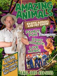 Amazing Animals Show At The Comedy Barn Theater - Theaters August 2015 Savvy Sightseeing Moms Comedy Barn Theater In Pigeon Forge Tn Tennessee Vacation Discount Tickets To The Juggler At The Niels Duinker From Holland Presents Youtube 2014 Promo Vintage Videos Smokies Crazy Shenigans Jungle Jack Hanna Saves Child Seerville Highway 441 Billboard Advertising Sign Stock