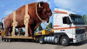 100 Cow Truck Intelligent Technology Modern Transportation Mega Machine
