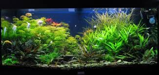 aquarium d eau douce offrez vous enfin l aquarium de vos rêves aquabulles sarl