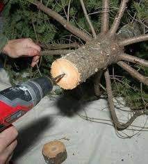 Xmas Tree Waterer by Best 25 Christmas Tree Water Ideas On Pinterest Christmas Tree