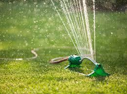 vers blancs sur la pelouse comment les contrôler protégez vous