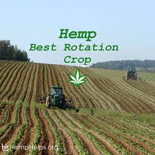 Monoculture Farming Has Been Taking A Toll On Farm Soil. #Hemp ... Bring The Farm To Your Backyard Innovation Smithsonian Guide Growing Rice Southern Exposure Seed Exchange Simple Vegetable Garden Monoculture Farming Has Been Taking A Toll On Farm Soil Hemp With Cabbage In Burgundy In Our A Weekend Willamette Valley 5 Cash Crops You Can Grow Gtblog Cowpea Annual Crop Stock Photo Picture And Plant And Manage Cover For Maximum Weed Suppression Extension Greenhouse Ftilizer Plants Flowers Landscaping Frontyard Three Things Very Dull Indeed Corn Backyard 2016 Weeks