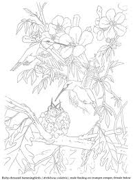 Humming Bird Coloring Pages Colouring Adult Detailed Advanced Printable Kleuren