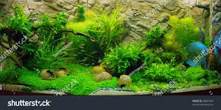 Plant Aquarium Aquascaping Stock Photo 65827924 - Shutterstock Out Of Ideas How To Draw Inspiration From Others Aquascapes Aquascaping Aquarium The Art The Planted Plant Stock Photo 65827924 Shutterstock Continuity Aquascape Video Gallery By James Findley Green With River Rocks Aqua Rebell Qualifyings For 2015 Maintenance And Care Guide Outstanding Saltwater Designs 2012 Part 1 Youtube Dennerle Workshop Fish
