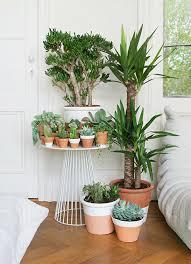 plante dans chambre à coucher plante verte chambre a coucher mobilier table plante de chambre