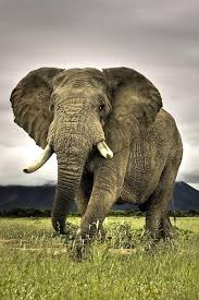 One Of The Worlds Most Beautiful Animals And