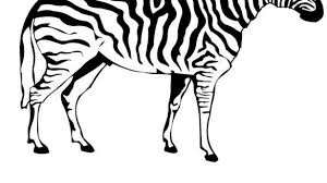 Zebra Coloring Pages For Kids Printable Of Pictures To Print