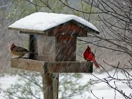 Ohio Wildlife Education Update The Important Cardinal