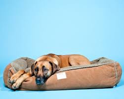 12 great gifts for the dog lover on your list wired