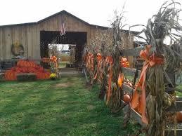 Atlanta Pumpkin Patch Corn Maze by 33 Best Pumpkin Patch Images On Pinterest Pumpkin Patches Corn