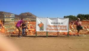 Tanaka Farms Pumpkin Patch by Tour Of Tanaka Farms Pick Your Own Strawberry Experience Any Tots
