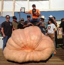 Largest Pumpkin Ever Carved by How To Grow Giant Pumpkins Growing Giant Pumpkin Seeds Plants