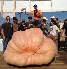 Worlds Heaviest Pumpkin Pie by How To Grow Giant Pumpkins Growing Giant Pumpkin Seeds Plants