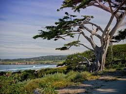 Carmel CA Bed and Breakfast
