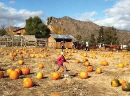 Pumpkin Patch North Bend Oregon by Heavenly Harvest U2014 Experiencing Central Oregon U0027s Amazing Autumn