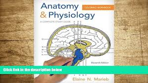 Dental Anatomy Coloring Book Free Download Pdf Physiology Workbook A