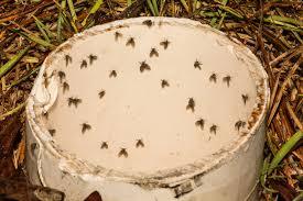 schmetterlingsmücken im abfluss ursachen und maßnahmen