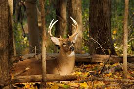 When Do Deer Shed Their Antlers Ontario by Ontario Out Of Doors Magazine Hunting Fishing Outdoors