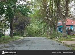 100 Dublin Street Tree Down On Halifax Stock Editorial Photo