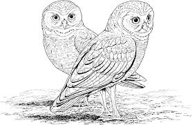 Hard Owl Coloring Pages Printable