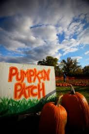 Pumpkin Patch Nashville Area by Shuckles Corn Maze U0026 Pumpkin Patch Nowplayingnashville Com