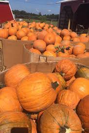 Pumpkin Patch Bastrop County by These Are The Best Pumpkin Patches In Every Southern State Your