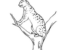 440x330 Panther Coloring Pages Index Black