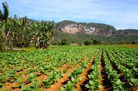 Horseback Riding Through The Tobacco Fields In Vinales