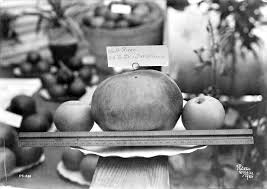 West Produce Pumpkin Patch Fayetteville Nc by E M Ball Photographic Collection