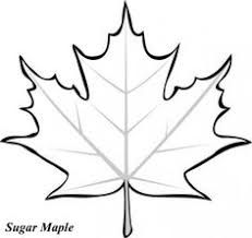 Leaf Printable Coloring Pages Need Template For Art Project