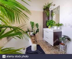 indoor dschungel stockfotos und bilder kaufen alamy