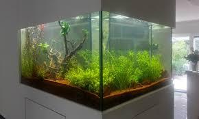 aquarienbau berlin aquariendesign ah roomdesign