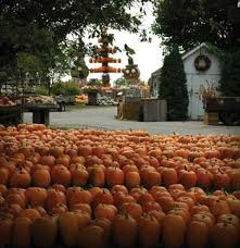 Pumpkin Patch Indiana County Pa by The Great Pumpkin Patch Arthur Illinois Illinois Home Sweet