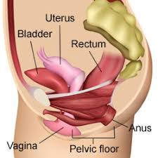 pelvic floor tension myalgia