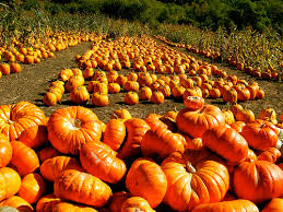 Pumpkin Patch Half Moon Bay Ca by Flickriver Scvha U0027s Photos Tagged With Autumn