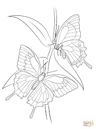 Awesome Printable Butterfly Insect Coloring Pages For Kids