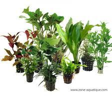 lot de 10 plantes variées 80 à 120 litres top prix zone
