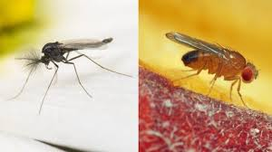 trauermücken befall erkennen loswerden und dauerhaft