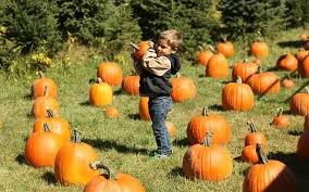 Pumpkin Picking In Ct by Connecticut Farms Tips For Visiting Farms