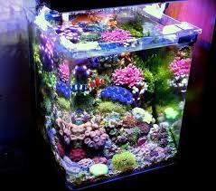 aquarium nano eau de mer les 25 meilleures idées de la catégorie aquarium eau de mer sur
