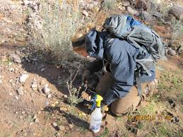 Colorado Blm Christmas Tree Permits by Dixie National Forest Home