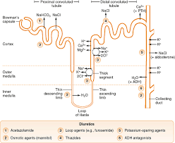 High Ceiling Loop Diuretics Adverse Effects by Diuretics Basicmedical Key