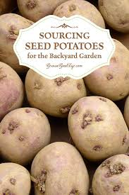 Sourcing Seed Potatoes For The Backyard Garden | Potatoes Growing ... Texas Garden The Fervent Gardener How Many Potatoes Per Plant Having A Good Harvest Dec 2017 To Grow Your Own Backyard 17 Best Images About Big Green Egg On Pinterest Pork Grilled Red Party Tuned Up Want Organic In Just 35 Vegan Mashed Potatoes Triple Mash Mashed Pumpkin Cinnamon Bacon Sweet Gardening Seminole Pumpkins And Sweet From My Backyard Potato Salad Recipe Taste Of Home