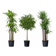 Pot Plants For The Bathroom by Tropisk Potted Plant Ikea