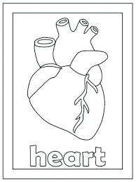 Free Printable Human Body Coloring Pages Elegant Motivate Color Image Heart Pdf
