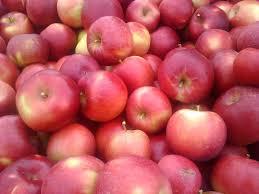 Christmas Tree Shop Watertown Ny Hours by Fresh Apple Varieties Fruits Vegetables Baked Goods U0026 Online Store