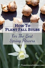 how to plant tulips and other flowering bulbs